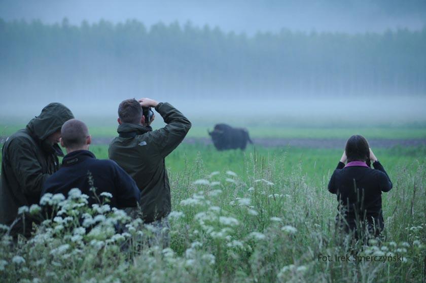Mensen doen photos van een bizon